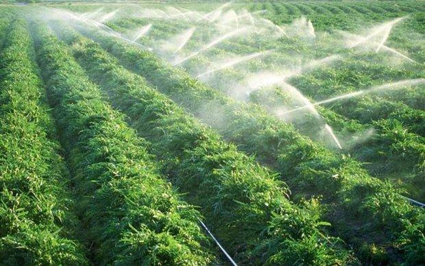 طرح های آبیاری تحت فشار در بخش کشاورزی استان بوشهر گسترش می یابد